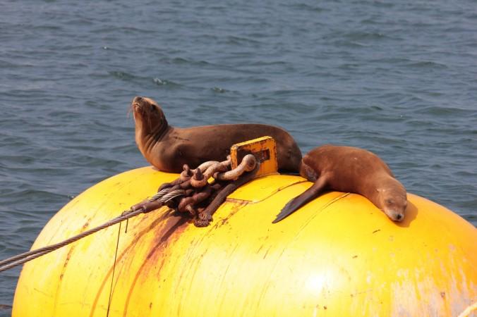 Buoy seals